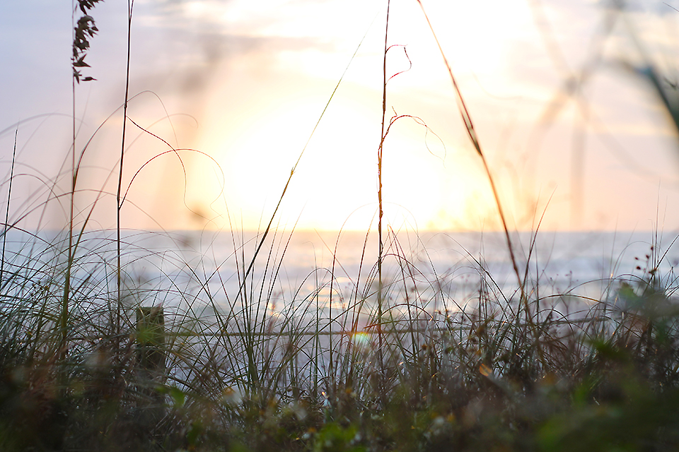 Panama City Beach - Stunning sunset seen through dune grass