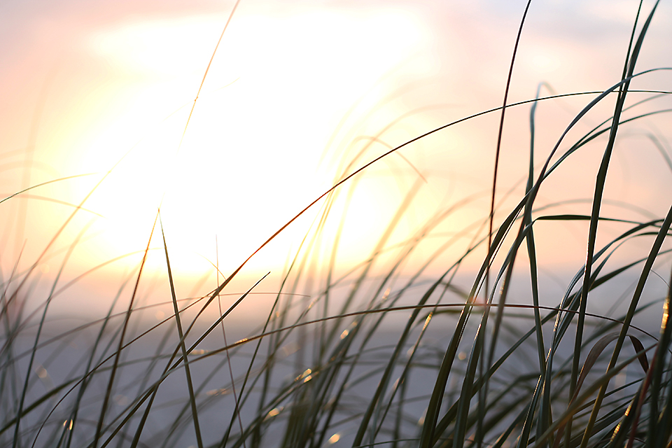 Panama City Beach - Sunset as witnessed through dune grass