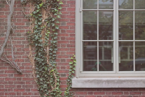 Part of a window set in a redbrick wall with trailing, green ivy.